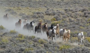 Marilyn Holdsworth BLM Roundup.